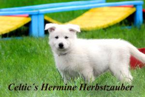 hermine2