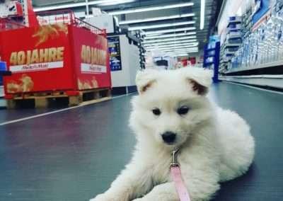 penny weißer schäferhund