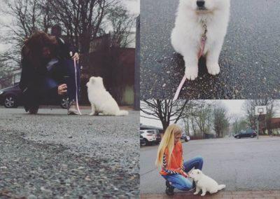 penny weißer schäferhund2